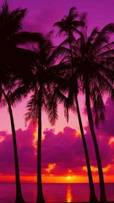 PINK~ Orange Sunset