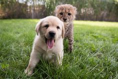 cat-and-dog-01