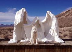 tigre branco das neves - Pesquisa Google