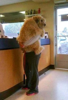 this dog was comforted by his person during a trip to the vet.