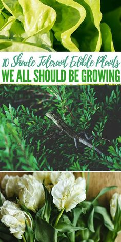 10 Shade Tolerant Edible Plants We All Should Be Growing - food