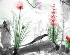 Beautiful X-Ray Images Of Nature by Arie Van`t Riet