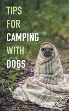 Tips for camping wit