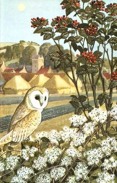 Barn owl and full harvest moon - C.F. Tunnicliffe, 1960 for Ladybird Books