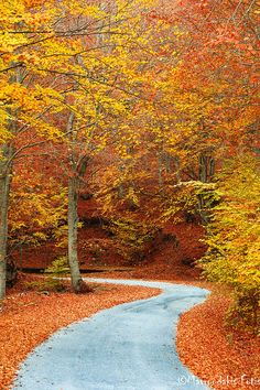 autumn colors in the forest road , Greece