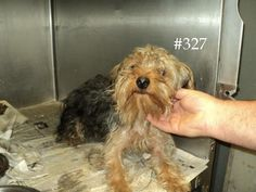 Logan County Pound WV This baby needs you to share him! logancountyanimals@gmail.com