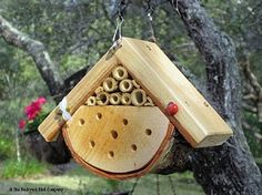 I didn't even know there was such a thing as a ladybug house ... now I want to be a ladybug ...