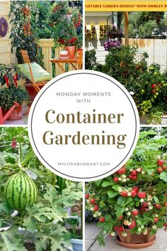 Have only a small area but you want to grow veggies or berries? How about growing them in containers and learn how with these posts.