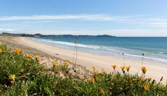 Pataua North Bay Of Islands, Auckland, New Zealand, Dreams, Group, City, World, Beach, Water