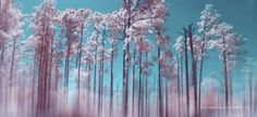 The Pink Forest by Julie Everhart on 500px
