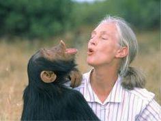 Dame Valerie Jane Morris-Goodall, meglio nota come Jane Goodall, è un'etologa e antropologa britannica. È nota soprattutto per la sua ricerca sulla vita sociale e familiare degli scimpanzé