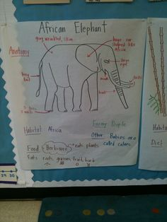 Animal Unit: Elephant Pictorial Input Chart
