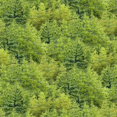 Tree Fabric - Trees All Over from Wild At Heart for Wilmington Prints 12606 777 Green - 1/2 yard
