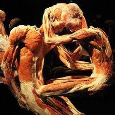 See over 200 astounding anatomical displays at Gunther von Hagens' 'Body Worlds: The Happiness Project'. His plastinated bodies strike poses reminiscent of everyday life, revealing the biological effects that happiness has on our bodies along with their complex structures and workings. It's tasteful, fascinating, and fun for all ages. Enjoy skip-the-line entry with one of our great value print-at-home tickets. #Amsterdam #BodyWorlds #Plastination #Anatomy