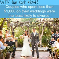 20 Insane Facts to Make You Seem Smarter at Parties - The internet has generated a huge amount of laughs from cats and FAILS. And we all out of cats. Party Fail, Wtf Fun Facts, Crazy Facts, Random Facts, Shocking Facts, Casual Wedding, Wedding Prep, Wedding Ideas, Fandoms
