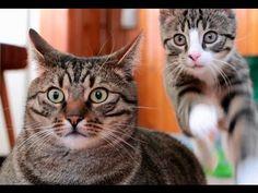 Śmieszne Koty - Prosto z Polski (The Best of BoBo & Nikita) from cuteoverload....sooo cute!!!
