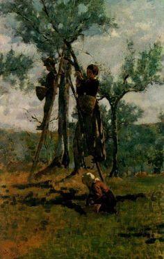 Niccolò Cannicci, ''la raccolta delle olive, 1892c., olio su tavola, cm 48x30, ubicazione ignota