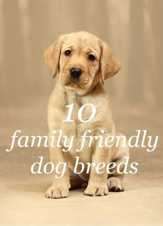 These are the top 10 family friendly dog breeds familienfreundliche Hunderassen Small Family Dogs, Best Family Dog Breeds, Top 10 Dog Breeds, Dog Breeds That Dont Shed, Best Dog Breeds, Puppy Breeds, Small Dog Breeds, Best Medium Dog Breeds, Small Dogs