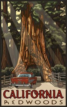 California Redwoods National Park United States Travel Advertisement Art Poster