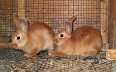 I had 20 Palomino rabbits at one point in time.  Dad said NO MORE!!