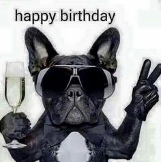 Funny happy birthday pictures, images, and pics. Have some fun with your friends on their birthday by giving them funny birthday pictures, wishes, and quotes Funny Happy Birthday Pictures, Birthday Wishes Funny, Happy Birthday Meme, Happy Birthday Messages, Happy Birthday Greetings, Birthday Love, French Bulldog Happy Birthday, Funny Happy Birthdays, Birthday Memes For Men