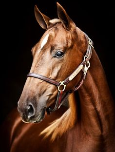 quarter horse head pictures - photo #27