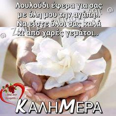 Good Morning, Floral, Mornings, Beautiful, Decor, Good Day, Dekoration, Buen Dia, Decoration