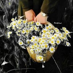 Color Splash, Daisy, Cami, Islam, Daisies, Flowers, Splash Of Colour, Paint Splats, Margarita Flower
