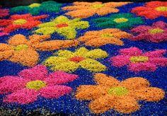Preparação dos tapetes de Corpus Christi em Flores da Cunha