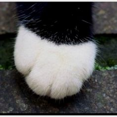I absolutely love cat feet.