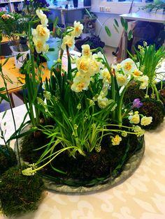 Arrangement Plants, Plant, Planets