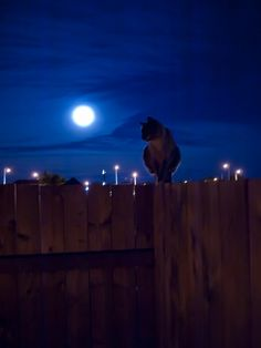 Cat moon by silentpierce, via Flickr
