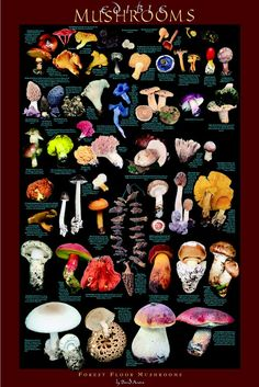 Mushroom Posters - Edible Forest Mushrooms Posters