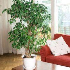 Plantes vertes int rieur faciles entretenir s lection de 20 esp ces plants urban - Plantes d int u00e9rieur faciles d entretien ...