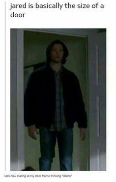 Jared is the size of a door Jensen Ackles, Jared And Jensen, Jared Padalecki, Sam Winchester, Misha Collins, Destiel, Supernatural Memes, Spn Memes, Mark Sheppard