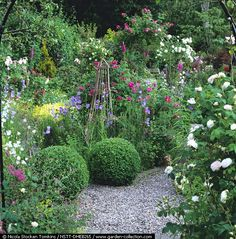 In herb garden, box balls punctuate gravel paths & beds of foxglove, campanula, marguerite, Apothecary's Rose, herbs & (on far arch) Rosa 'Iceberg' & 'American Pillar'