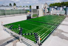 """""""After building the AlgaePARC pilot facility in 2010, we have developed a unique expertise that we want to share with other groups interested in algae"""