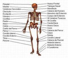 arthrosis osteoporosis a vállízület