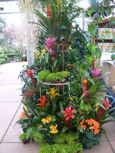 Tropical houseplant display from Cornell Farms, Portland, OR. Bromeliads & club moss take the stage.