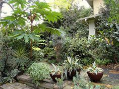 jardim perigo: Agave