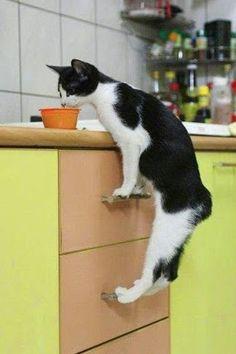 Ils m'ont interdit de sauter sur le plan de travail de la cuisine, faut donc que je fasse avec...