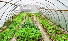 Tending a Greenhouse  http://www.rodalesorganiclife.com/garden/tending-greenhouse?cid=soc_Rodale's%2520Organic%2520Life%2520-%2520RodalesOrganicLife_FBPAGE_Rodale's%2520Organic%2520Life__