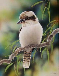 Animals And Pets, Cute Animals, Australian Animals, Animal Totems, Big Bird, Bird Pictures, Colorful Birds, Little Birds, Wildlife Art