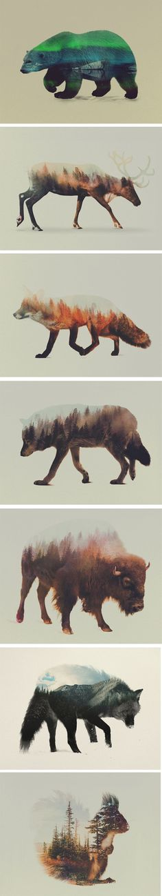Norwegian visual artist Andreas Lie merges verdant landscapes and photographs of animals to creates subtle double exposure portraits. Snowy mountain peaks and thick forests become the shaggy fur of wolves and foxes, and even the northern lights appear through the silhouette of a polar bear. Lie is undoubtedly influenced by his surroundings in Bergen, Norway, a coastal city surrounded by seven mountains.: