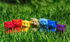 Игрушки валяные Радужные котята - радуга,котята,кот,валяный котенок,Валяный кот