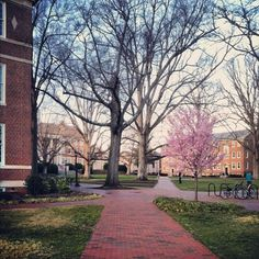 Would do anything to attend UNC-Chapel Hill next year. #lifelongwish
