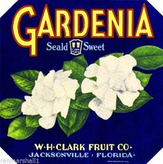 Jacksonville-Florida-Gardenia-Flowers-Orange-Citrus-Fruit-Crate-Label-Art-Print