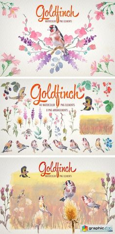 Watercolor Goldfinch Bird Clipart  stock images