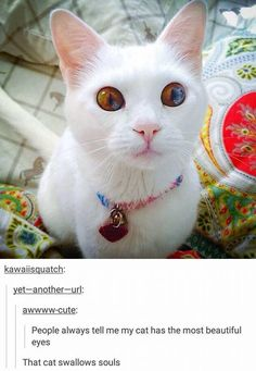 Cats: Image Gallery | Know Your Meme