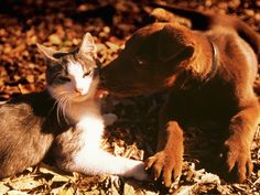 Hold a Samhain Ritual to Honor the Animals: Celebrate Samhain and honor the animals in your life.